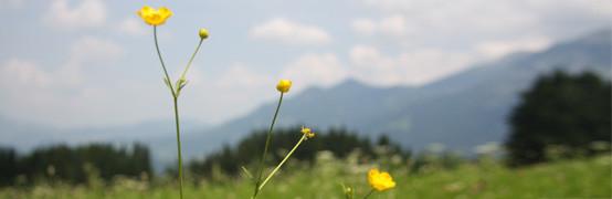 Allgäuer Alpenwelt zwischen Oberstdorf und Immenstadt an der Iller